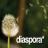 Diaspora_new_social_network
